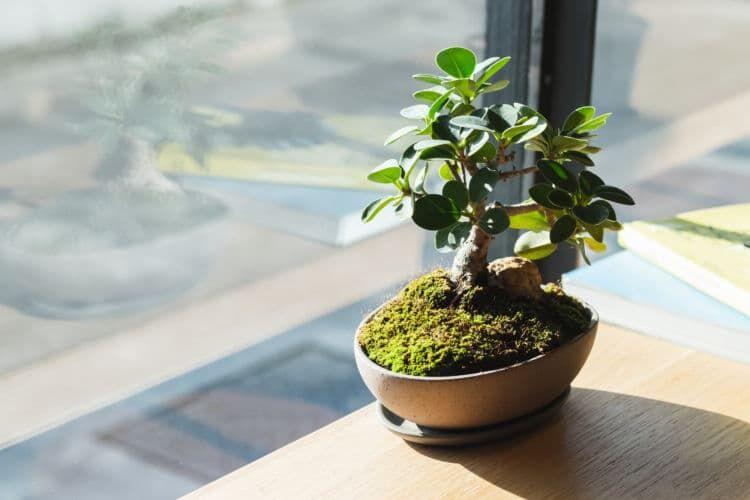 長く楽しめる大人の趣味「盆栽」の魅力とは?
