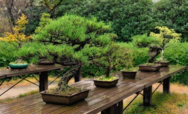 高級な盆栽は何が違う?