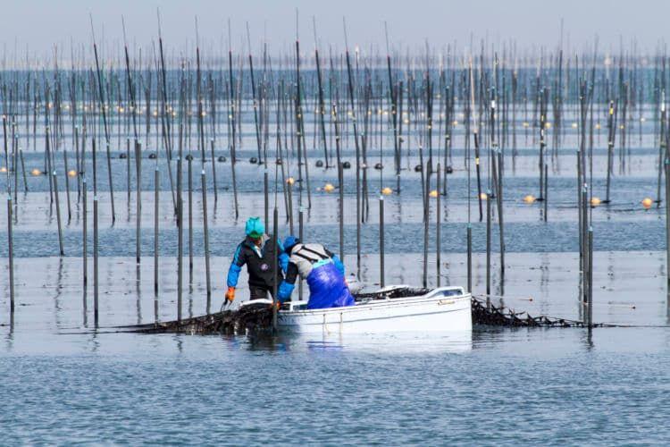 「よりおいしい海苔を」山本海苔店のおいしさへのこだわり