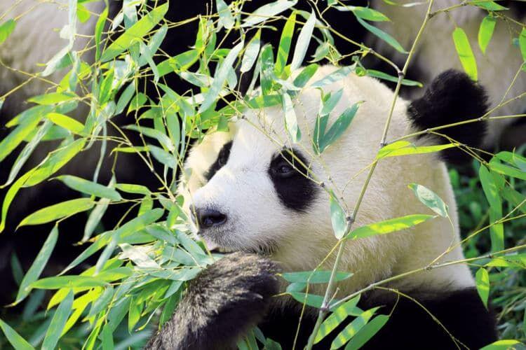 「上野動物園」 65歳以上は、入場券も年間パスポートも半額!