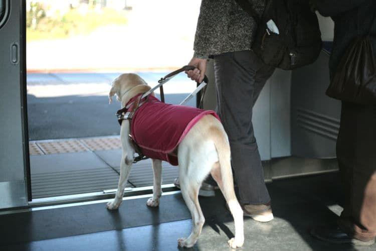 ③盲導犬ボランティア
